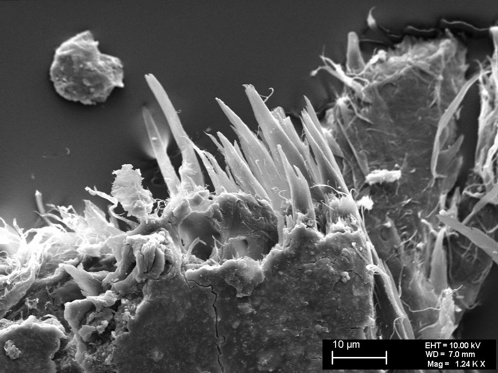 fig 24. Micro-photo. The fibres upon the paper's break-line have snapped unevenly A.Vabbe Landscape.Tree.  EKM M 4113. SEM