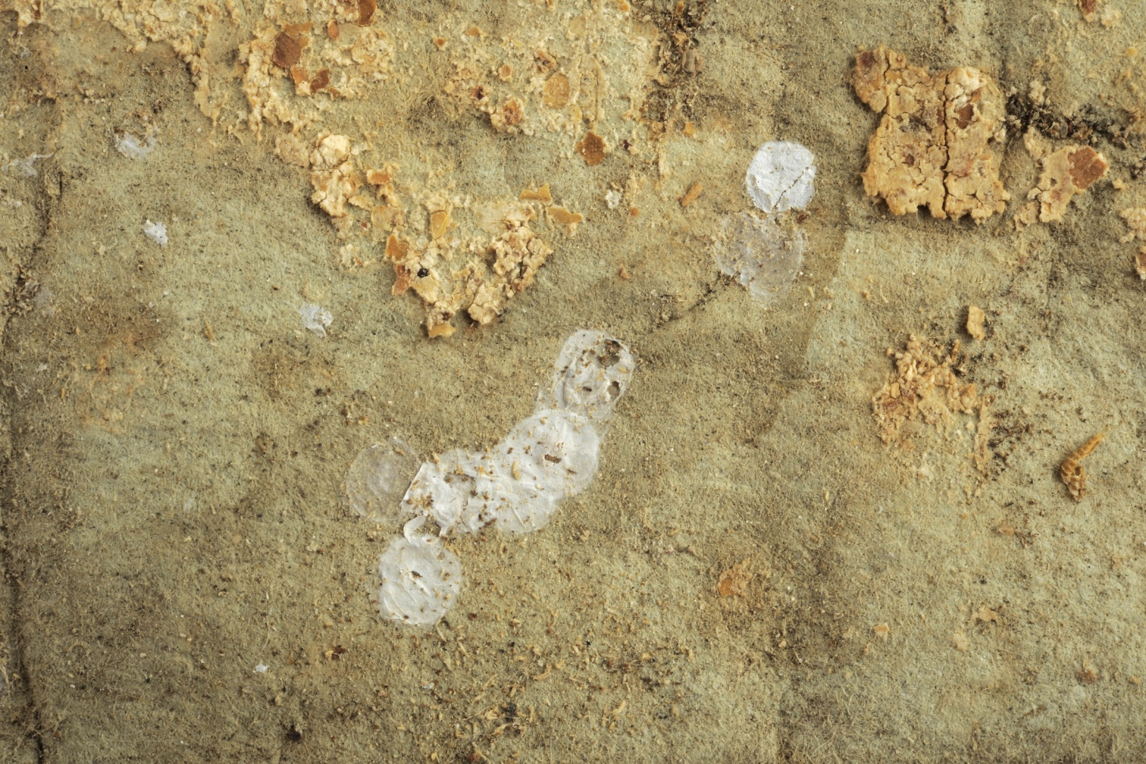 ill 6. This is the reverse side of the wallpaper with splotches of glue and dirt, insect- and moisture-damage, tears and material losses.