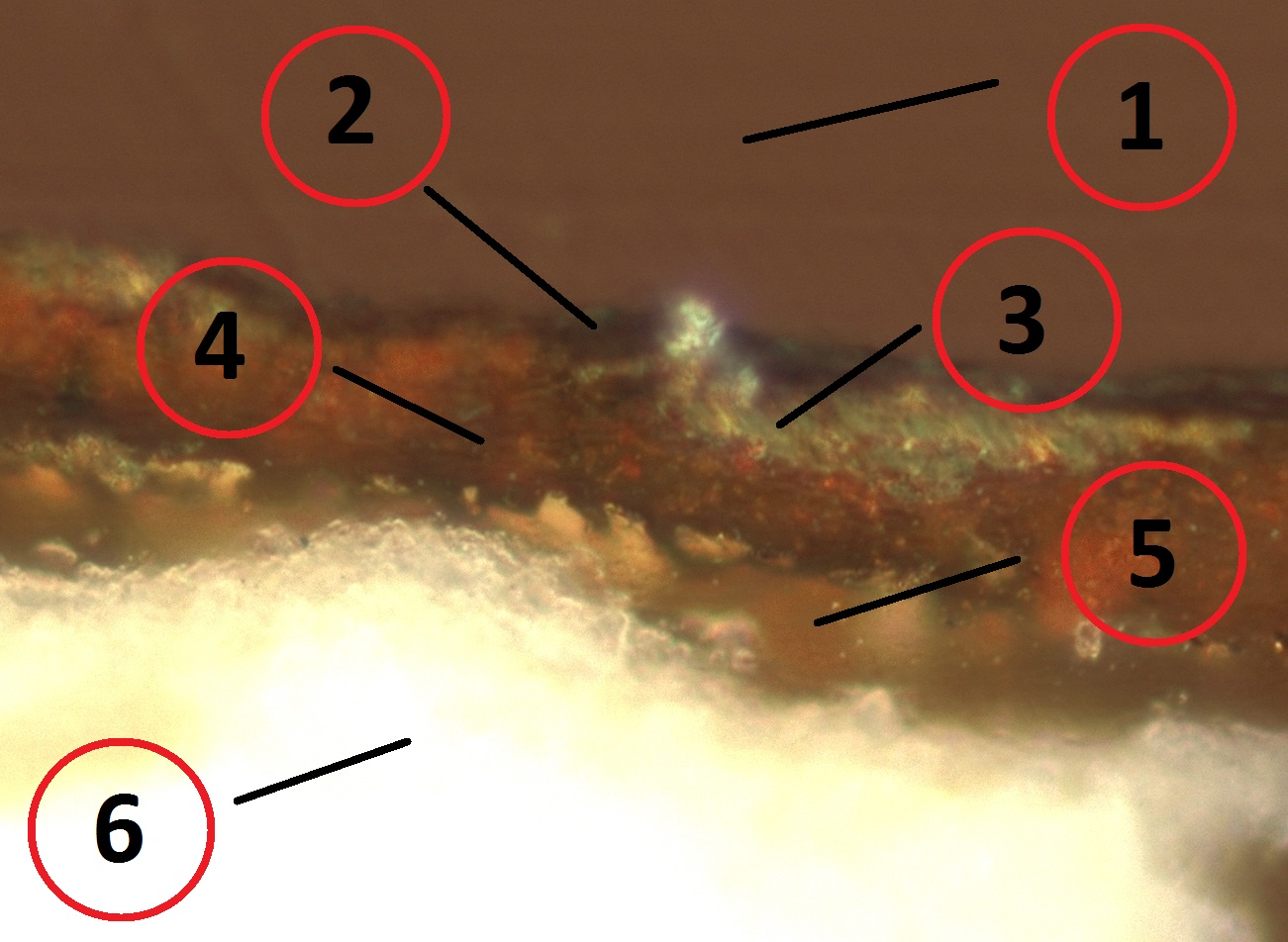 fig 8. Six layers are visible on the crosscut: 1. rezin with a sample inside 2. thin dark layer, probably dirt 3.-4. dark amber colour layer with metal powder shining golden 5. transparent grounding, possibly linseed oil 6. gypsum