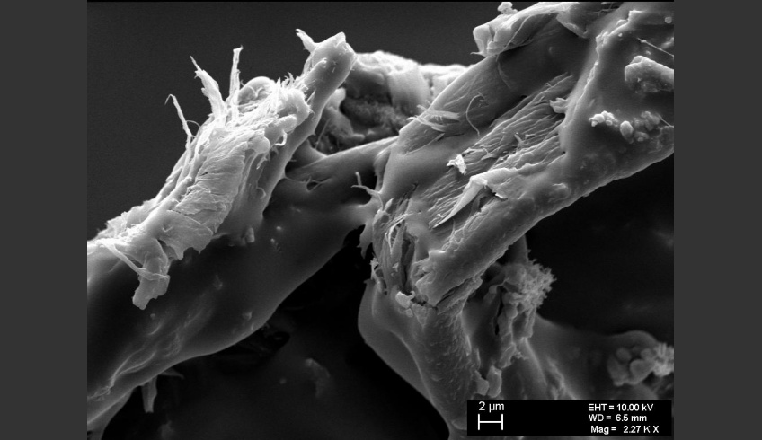 fig 21. Micro-photo. Fibrillation of the fibre surface hints at the dissolution of the cellulose fibre. A.Vabbe Landscape.  EKM M 4806. (SEM).