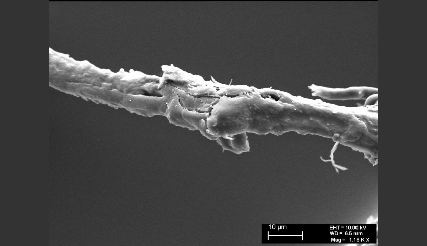 fig 22. Micro-photo. Damaged fibres, length- and crosswise splitting of a fibre A.Vabbe Landscape.  EKM M 4806. (SEM).