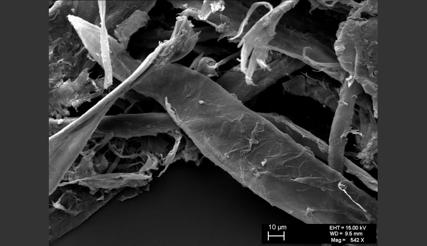 fig 23. Micro-photo. A coniferous tree fibre. A.Vabbe Landscape.Tree.  EKM M 4113. SEM