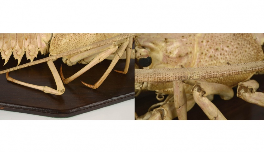 fig 41. Legs and tentacles were joined with the help of small paper tubes and the cracks were covered with veil paper.